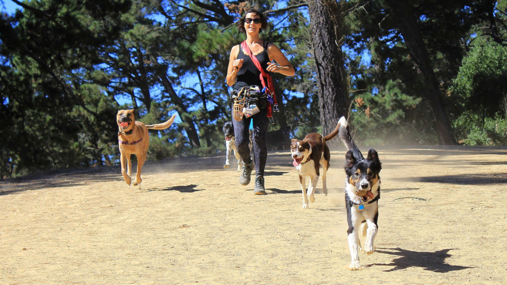 Best dog walking in Oakland CA